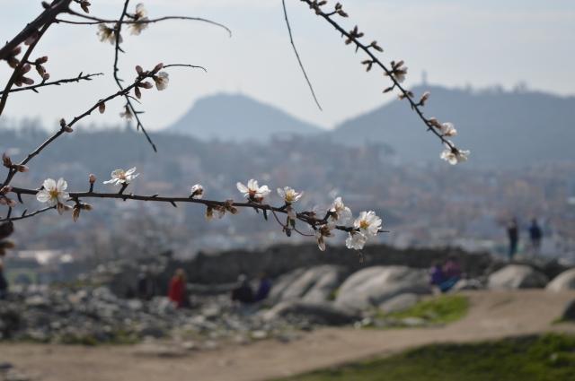началото на пролетта в Пловдив - малки неща
